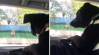Hilarious video shows confused pooch barking at billboard of dog