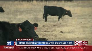 Cattle reunited with owners after drug trade - Video