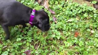 A Dog Plays With A Butterfly