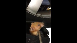 Mechanic Finds Furry Stowaway Within Car - Video