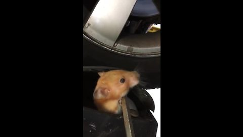Mechanic Finds Furry Stowaway Within Car