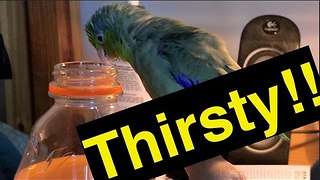 Bird Shows Bottle Cap Who's Boss - Video