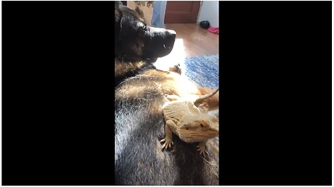 Lizard And Dog Set The Example Of A True Friendship