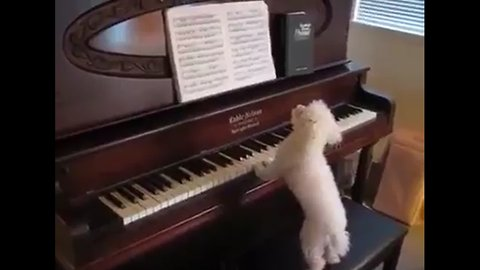 Buddy Piano's Master! Funny and cute beagle who plays piano!