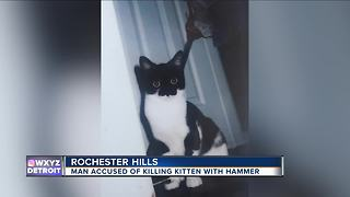 Man accused of killing kitten with hammer - Video