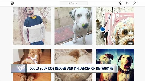 How to make your dog Instagram famous, be a social media influencer
