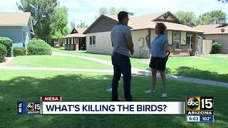 What is killing birds in Mesa? - Video