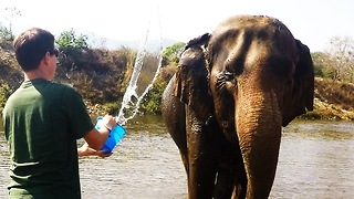 Rescued elephant enjoys river bath