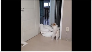 Jack Russell has priceless reaction to 'What The Fluff' challenge - Video