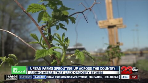 REBOUND: Urban farms sprouting up across the country, aiding areas that lack grocery stores