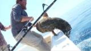 Goliath Grouper Off The Florida Coast - Video