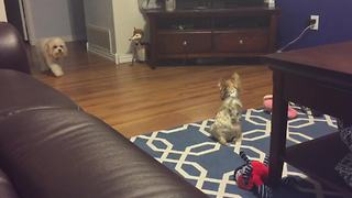 Stealthy Dog Sneaks Up On Another Dog - Video