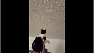 Cat helps owner catch bug on ceiling
