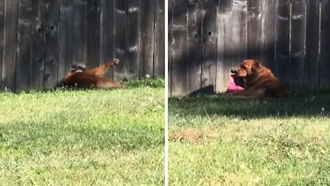 Dog becomes best friends with neighbor through hole in fence