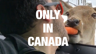 Things Only Canadians Will Understand - Video