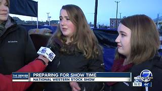 Preparing for show time at National Western Stock Show - Video