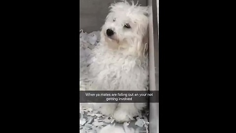Dog Stays Out Of Argument