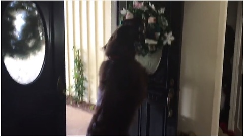 Holiday-loving dog fascinated by new house decorations