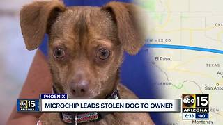 Microchip links stolen dog found at Phoenix facility to owner in Florida after two years