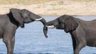 On Science - Elephants Love to Hug - Video