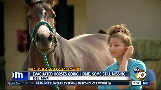 Evacuated horses going home, some still missing - Video