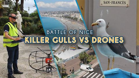 Killer seagulls vs drones: the battle over city of Nice