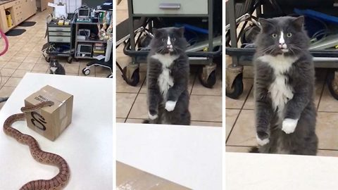 Cat Stands Up Like A Human After Seeing Snake For The First Time