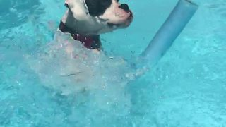 Boxer successfully learns how to use pool noodle - Video