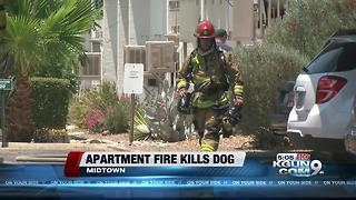Dog dies in two-story apartment fire in midtown - Video