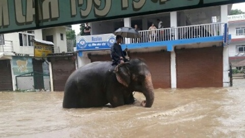 Passenger Rides Elephant Through Flooded Nepal Street