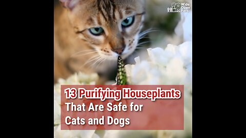 13 Purifying Houseplants That Are Safe for Cats and Dogs