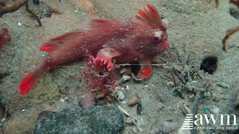 Researchers Make Rare Creature Discovery, Get It On Film For One Of The First Times Ever
