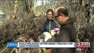 Rehabilitated bald eagle released at Pioneer Trails - Video