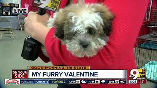 Find a cuddle buddy at My Furry Valentine at Sharonville Convention Center - Video