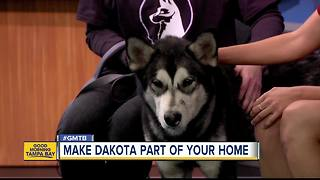 Jan. 7, 2018 Rescues in Action: Help Dakota find forever home - Video