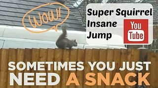 Spunky Squirrel Makes Impressive Jump - Video