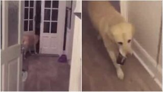 Dog gets owner a can of cider