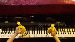 Dancing rubber chickens 'play' song on the piano - Video
