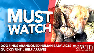 Brave mother dog finds abandoned human baby, acts quickly until help arrives - Video