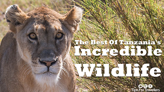 The Incredible Wildlife Of Tanzania