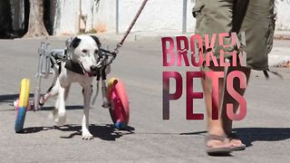 The pets whose lives really are better on two wheels - Video