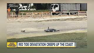 Red Tide now entering Pinellas County - Video