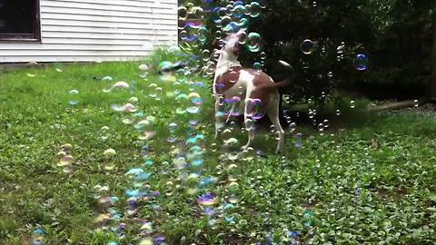Super Excited Dogs And Pretty Bubbles