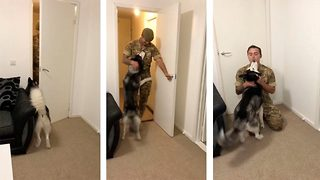 Mans best friend: Adorable moment devoted husky is reunited with soldier returning home - Video
