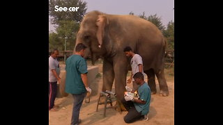 India Opens Its First Elephant Hospital