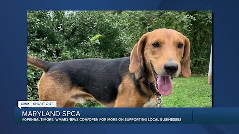 Raisin the dog is looking for a new home at the Maryland SPCA