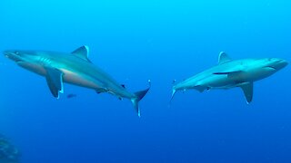 The mysterious and beautiful undersea world of the South Pacific