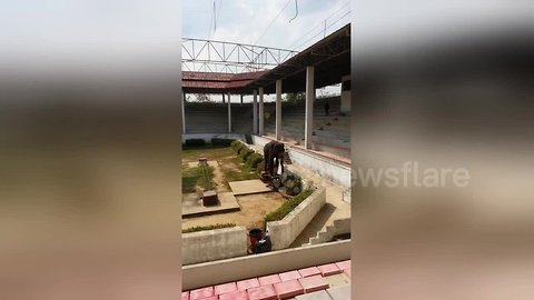 Tragic case of 'thin and weak' elephant performing circus tricks to empty zoo in Thailand