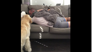 Jealous Pooch Gets Green With Envy When Owners Cuddle Without Him - Video