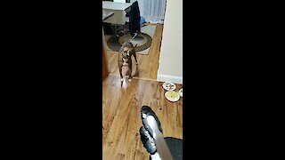 Dog doesn't know how to react to serving tongs